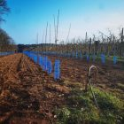 Au fil des saisons : Plantations de pommiers au Verger de Kerbelllec à Brech.